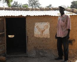 Hønseavl i Mali