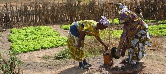 Mikrokredit-ordningen giver fx lån til gødning og frø til grønsagshaver. Grønsagerne sælges på lokale markeder og i hovedstaden.